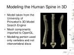modeling the human spine in 3d