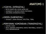 anatom 1