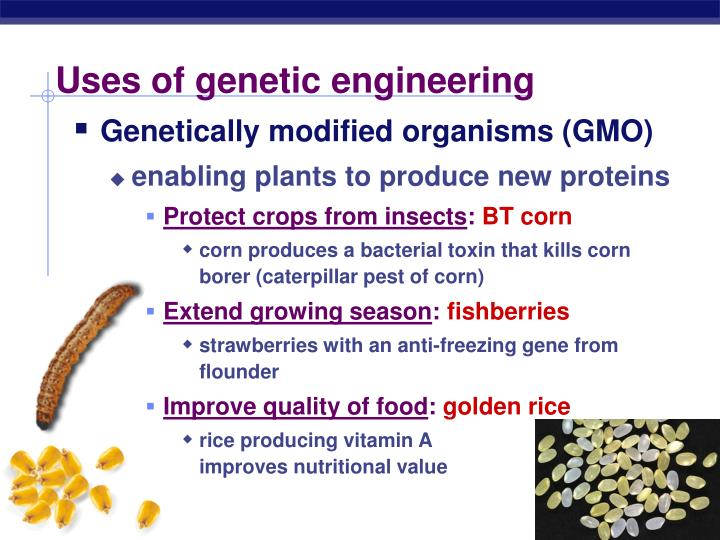 definition of genetically modified organisms biology essay These questions and answers have been prepared by who with regard to the nature and safety of genetically modified genetically modified organisms genetic.