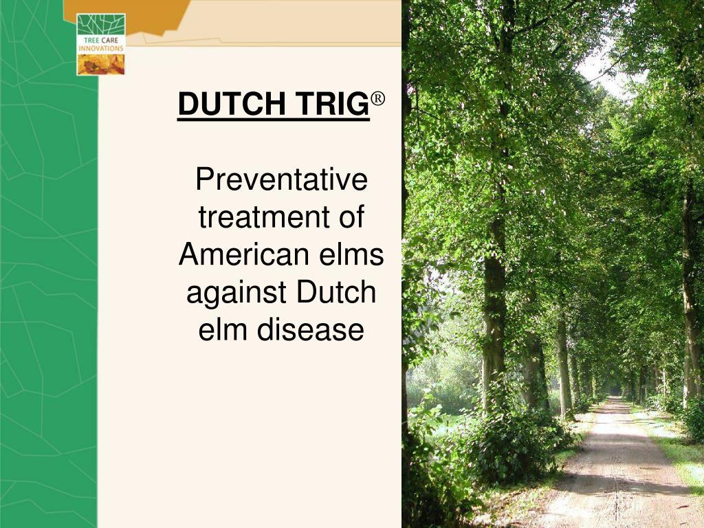 dutch trig preventative treatment of american elms against dutch elm disease l.
