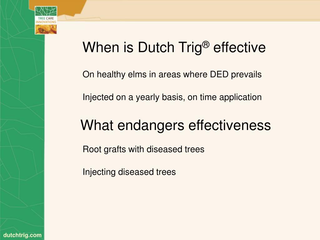 When is Dutch Trig