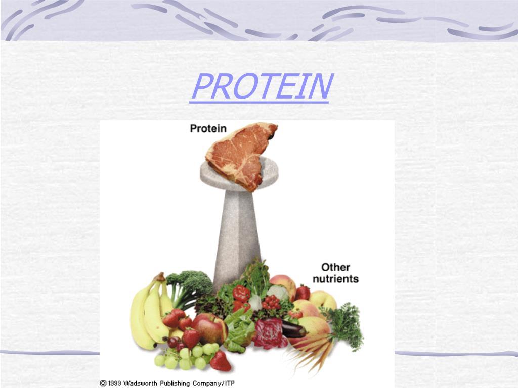 protein l.