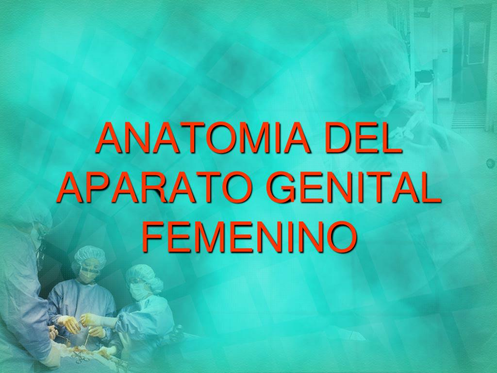 anatomia del aparato genital femenino l.