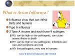 what is avian influenza