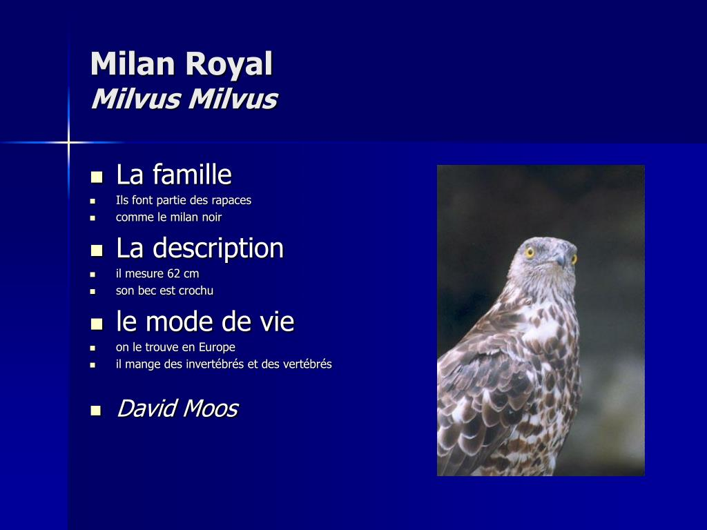 Milan Royal