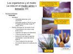los organismos y el medio la vida en el medio a reo o terrestre iv