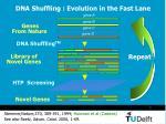 dna shuffling evolution in the fast lane