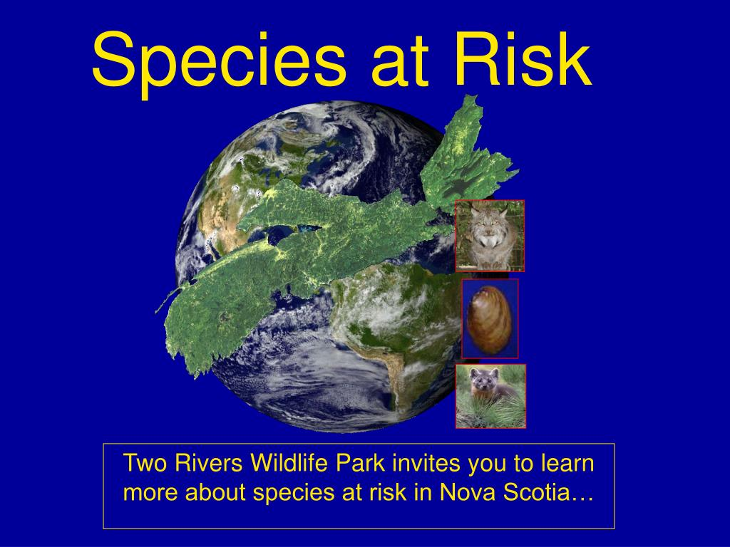 species at risk l.