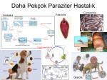 daha pek ok paraziter hastal k
