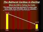the bathurst caribou in decline what the enr is telling the public