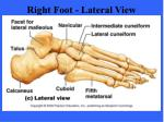 right foot lateral view
