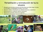 rehabilitaci n y reintroducci n de fauna silvestre