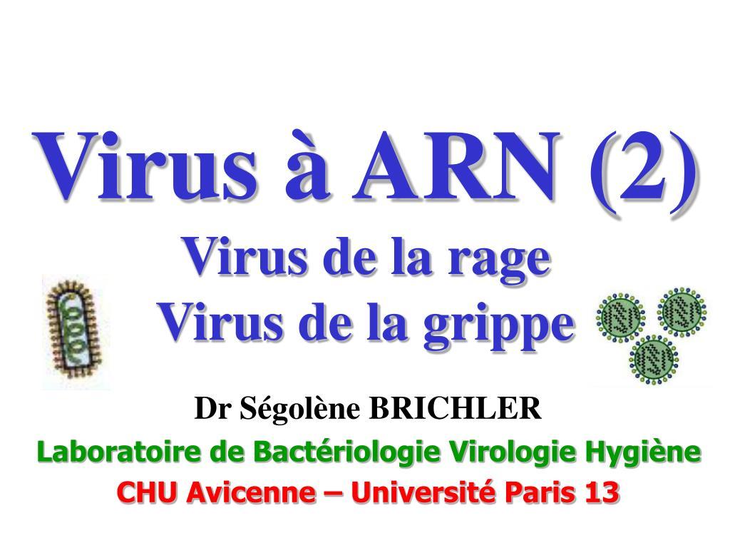 virus arn 2 virus de la rage virus de la grippe l.