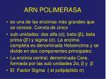 arn polimerasa