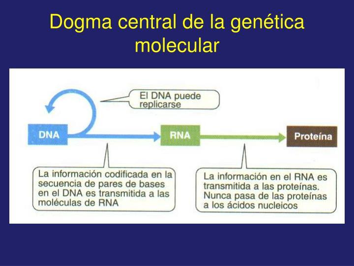 Dogma central de la gen tica molecular