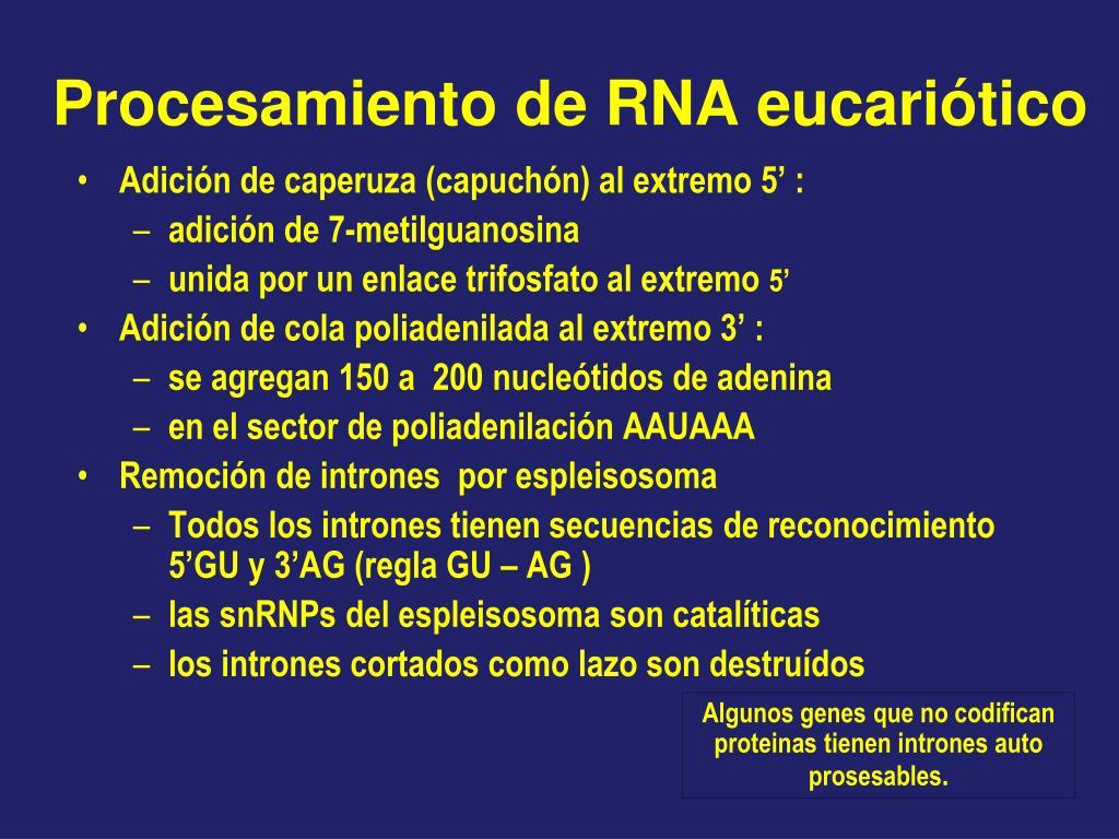 Procesamiento de RNA eucariótico