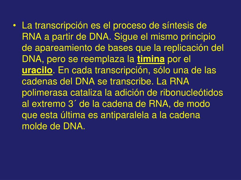 La transcripción es el proceso de síntesis de RNA a partir de DNA. Sigue el mismo principio de apareamiento de bases que la replicación del DNA, pero se reemplaza la