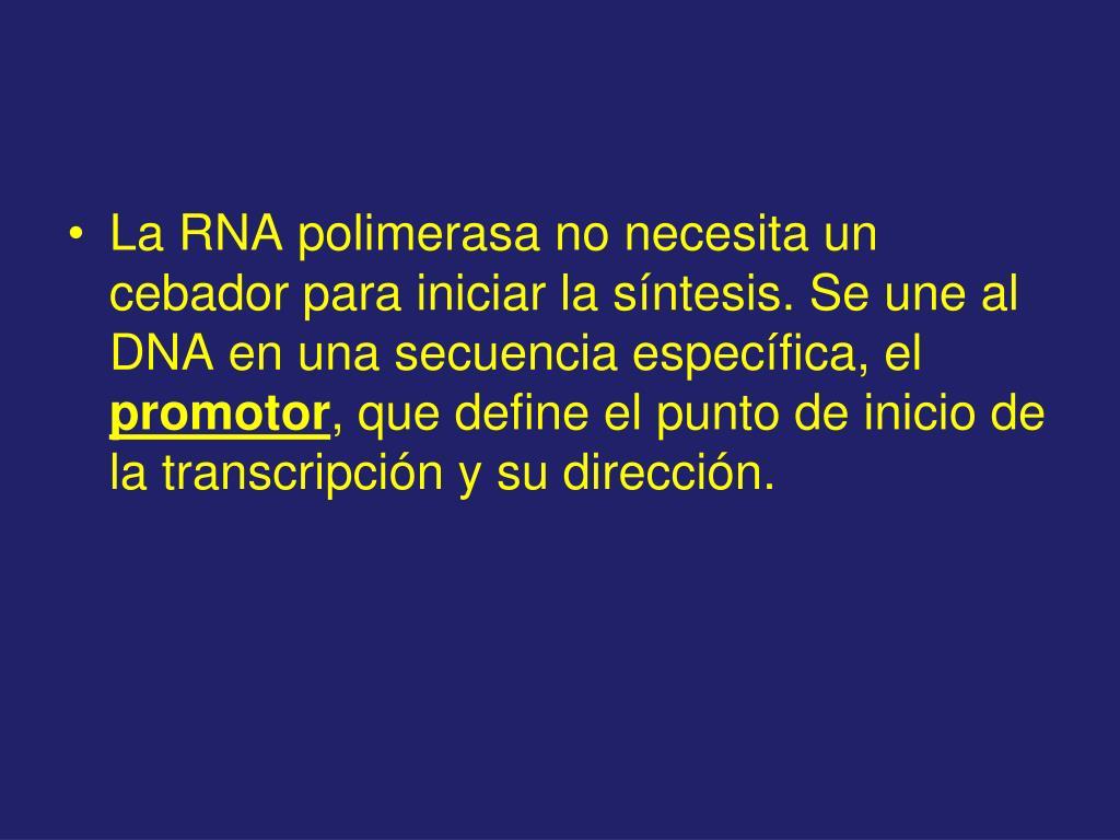La RNA polimerasa no necesita un cebador para iniciar la síntesis. Se une al DNA en una secuencia específica, el