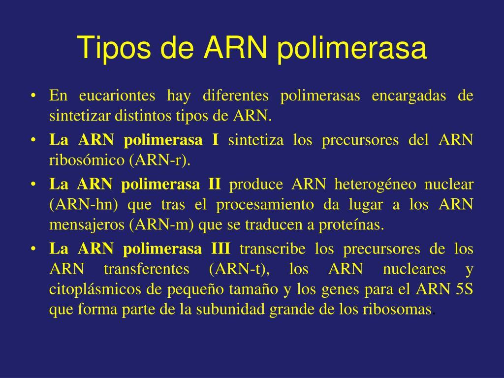 Tipos de ARN polimerasa