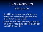 transcripci n15