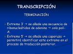 transcripci n17