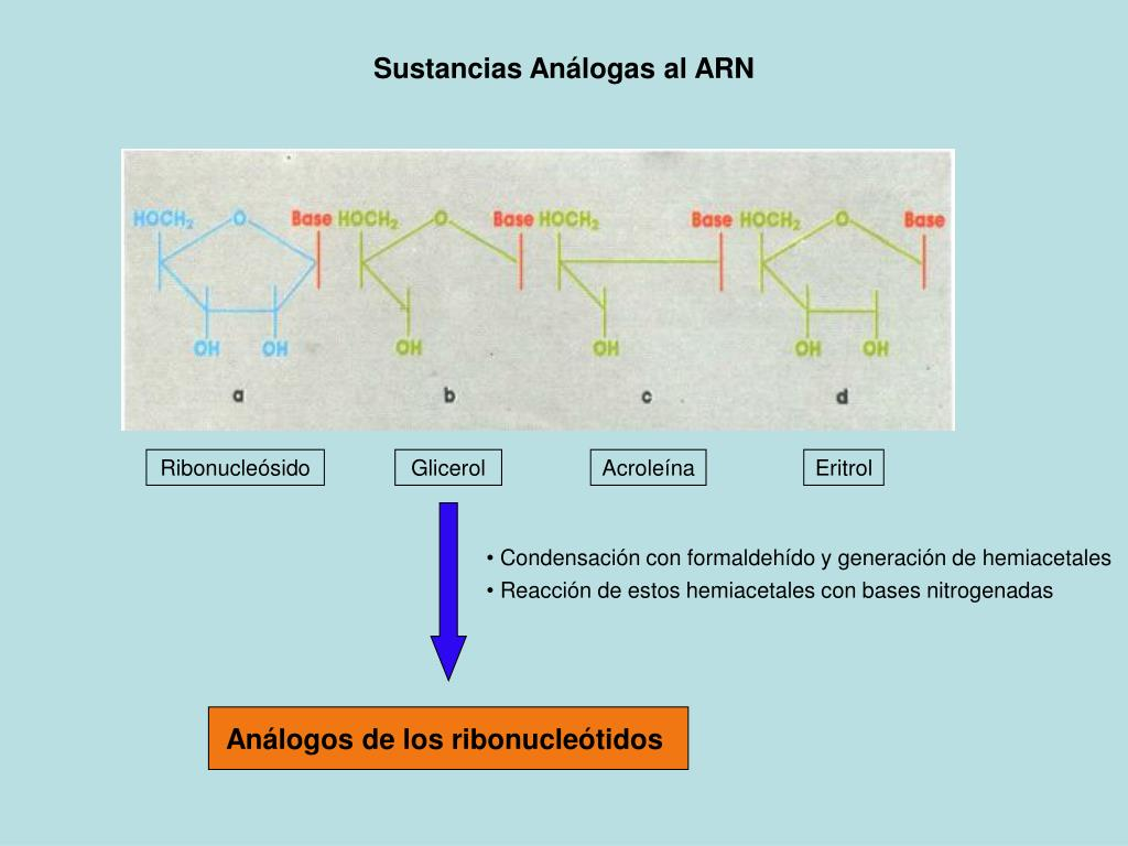 Ribonucleósido