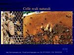celle reali naturali