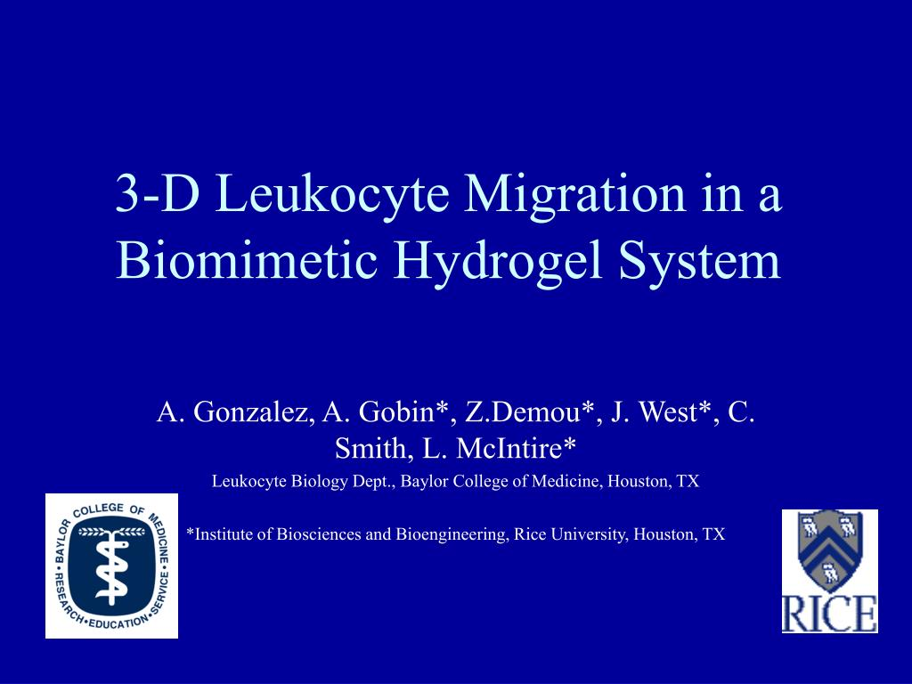 3-D Leukocyte Migration in a Biomimetic Hydrogel System