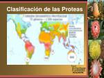 clasificaci n de las proteas