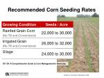 recommended corn seeding rates