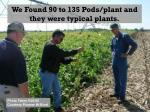 we found 90 to 135 pods plant and they were typical plants