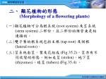 morphology of a flowering plants