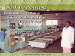 black tea processing2