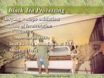 black tea processing3