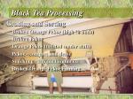 black tea processing4