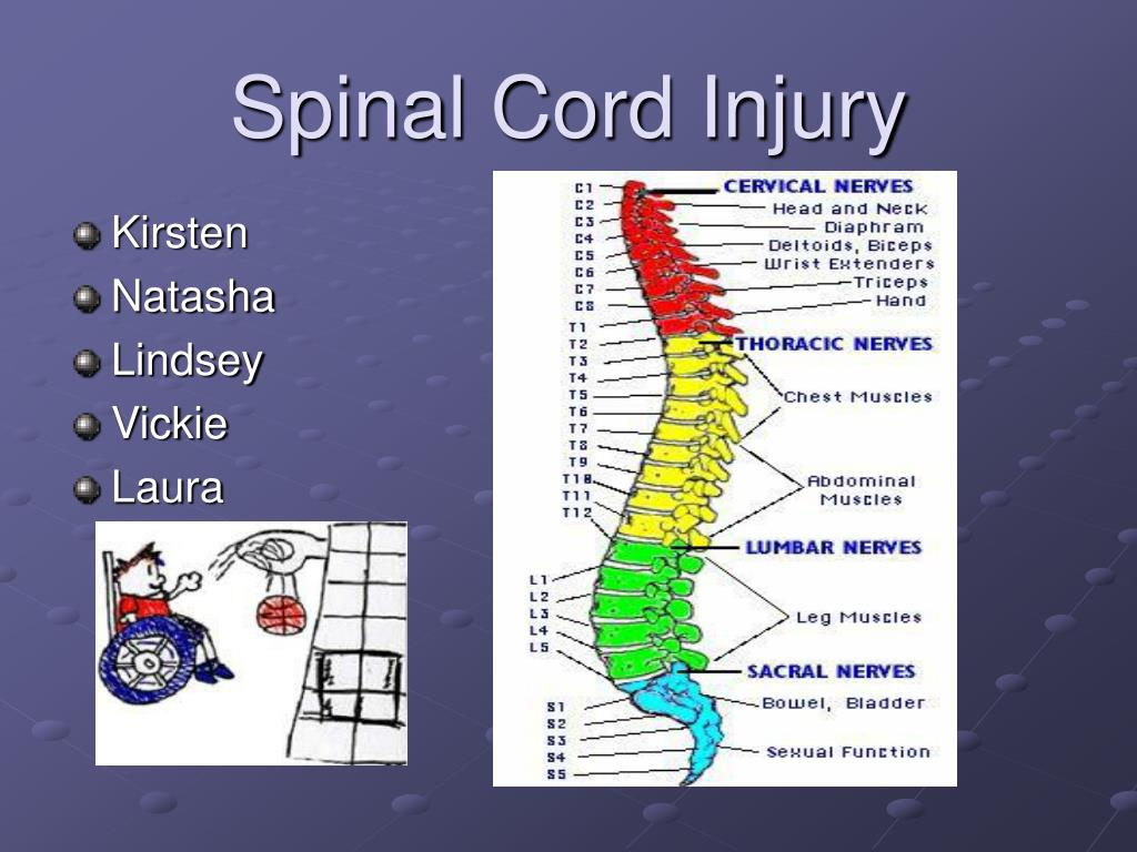 spinal cord injury l.