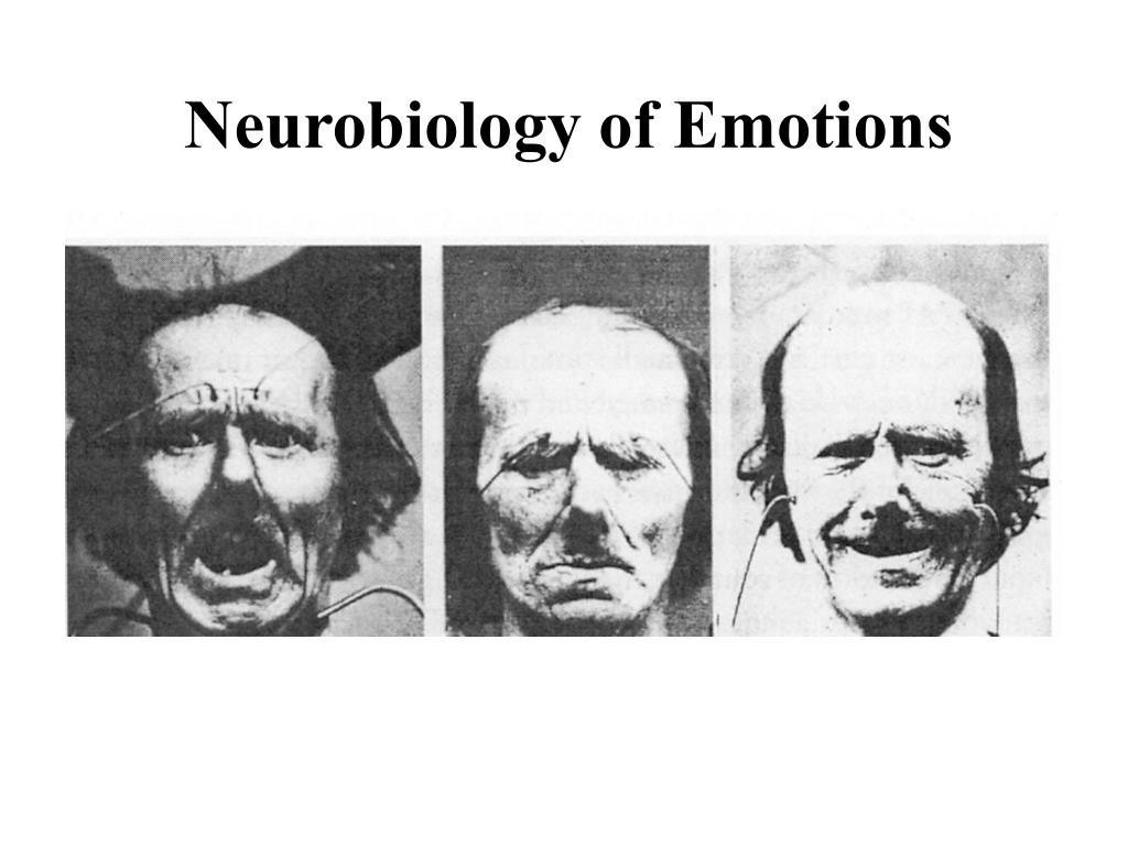 neurobiology of emotions l.
