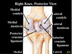 right knee posterior view
