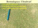 bermudagrass ultradwarf