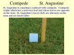 centipede st augustine