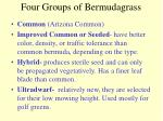 four groups of bermudagrass
