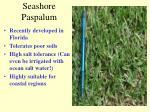 seashore paspalum
