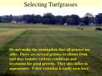 selecting turfgrasses7