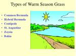 types of warm season grass