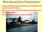 warm season grass characteristics