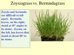 zoysiagrass vs bermudagrass