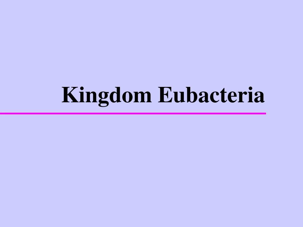 kingdom eubacteria l.