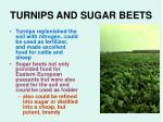 turnips and sugar beets