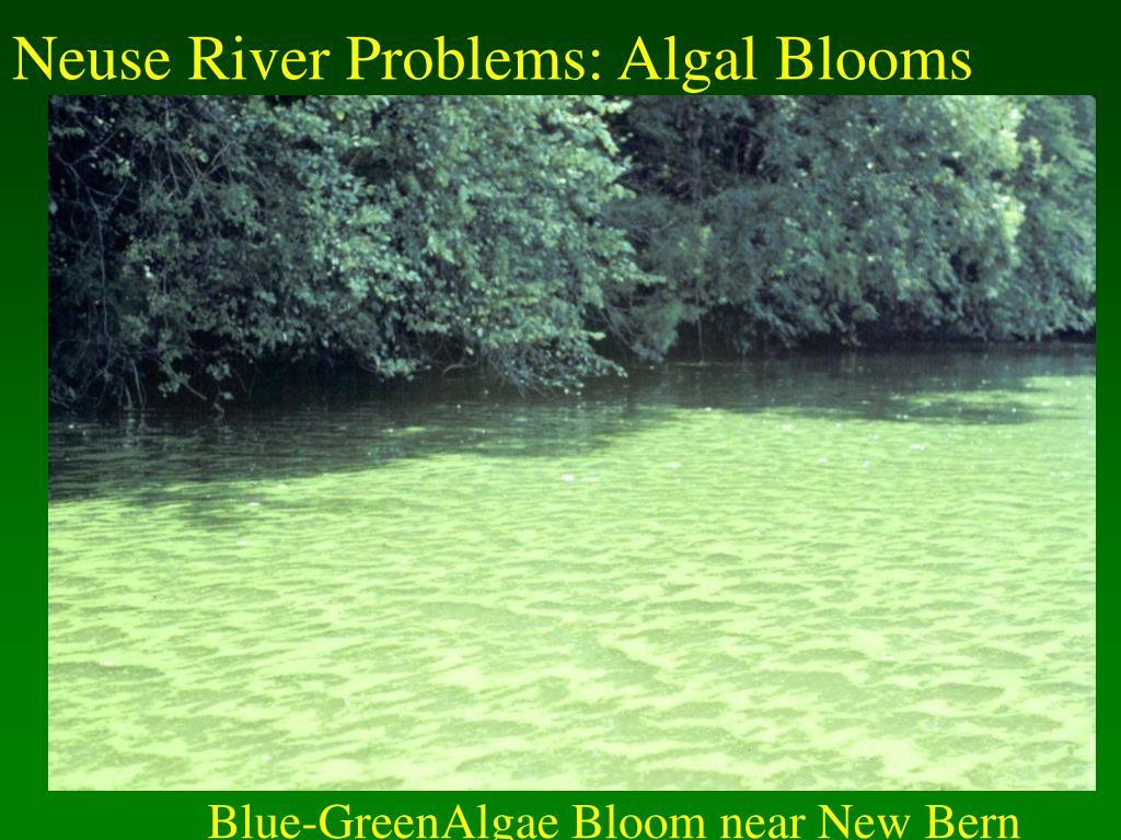Neuse River Problems: Algal Blooms