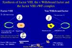 synthesis of factor viii the v willebrand factor and the factor viii vwf complex